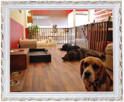 Amicanis Hundehotel